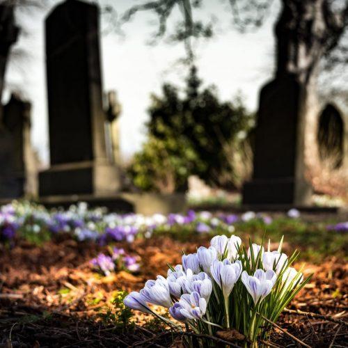 purple-crocus-in-bloom-during-daytime-161280